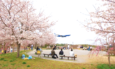 Sakura-no-Yama (Cherry Blossom Mountain)